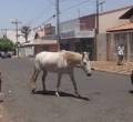 Animais de grande porte soltos pelas vias geram risco de acidentes. Em Rio Claro, Ney Paiva trabalha em busca de solução - Foto ilustração